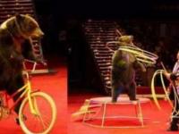 2020北京新春国际马戏小丑嘉年华演出详情、票价、购票入口