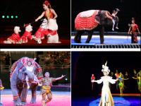 2020北京环球大马戏嘉年华观看指南(地址+门票+演出亮点)